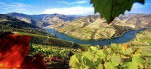 Vale do Douro. Foto: Turismo do Porto e Norte