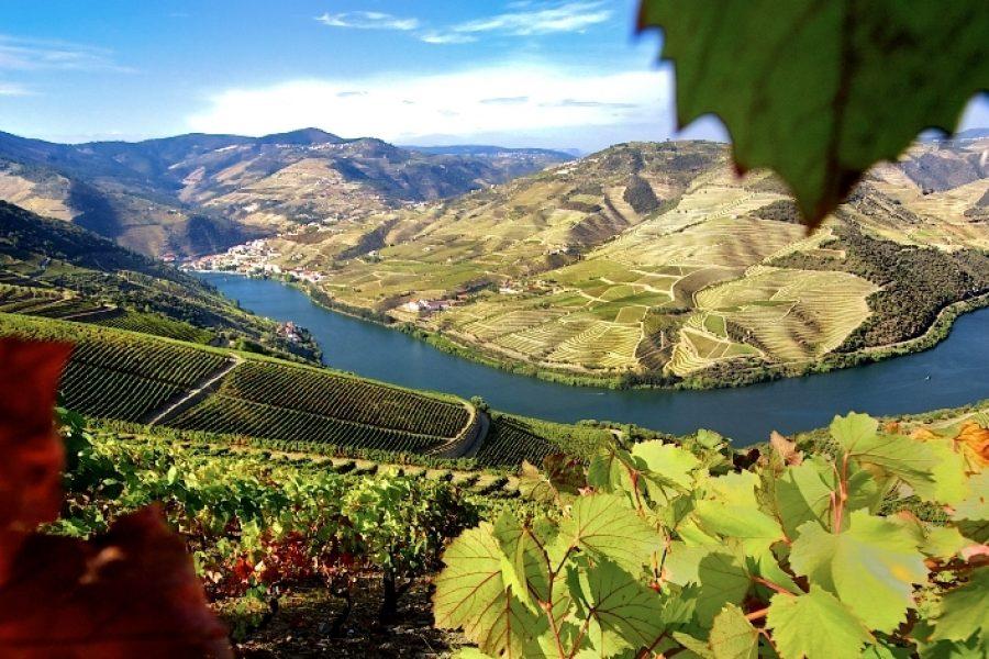 """""""Forbes"""" inclui Porto e Douro no top 20 de destinos imperdíveis"""